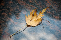 Autumnal lef on a tomb in cemetery Royalty Free Stock Photos