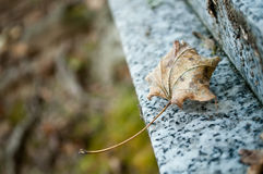 Autumnal lef on a tomb in cemetery Stock Image