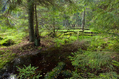 Autumnal look of swampy stand with little stream Stock Photos
