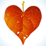 Autumnal love. Vector fallen red leaf in the shape of heart Stock Images