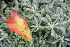 Autumnal macro view Royalty Free Stock Photo