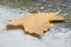 Autumnal maple leaf en stoned background. Closeup of autumnal maple leaf en stoned background Royalty Free Stock Images