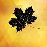 Autumnal maple leaf. EPS 10 Stock Photos