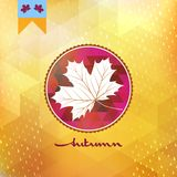 Autumnal maple leaf. EPS 10 royalty free illustration
