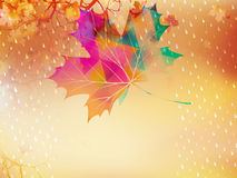 Autumnal maple leaf made of triangles. EPS 10 Stock Images
