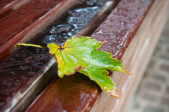 Autumnal  maple leaf with raindrops on bench Royalty Free Stock Image