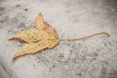 Autumnal maple leaf on stoned background. Closeup of autumnal maple leaf on stoned background Royalty Free Stock Photos