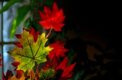 Free Autumnal Maple Leaves Stock Image - 101155191
