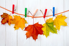 Autumnal maple leaves hanging on rope Stock Images