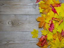 Autumnal maple leaves on old wood background Stock Photo
