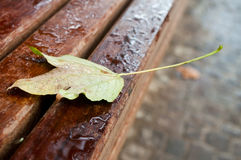 Autumnal  maple leaves with raindrops on bench Stock Images