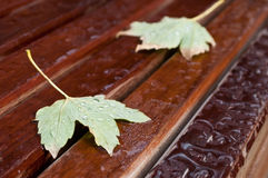 Autumnal  maple leaves with raindrops on bench Royalty Free Stock Photos