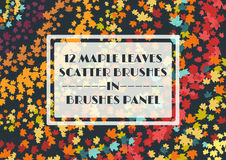 12 autumnal maple leaves scatter brushes set. In the brush panel. Vector illustration Royalty Free Stock Images