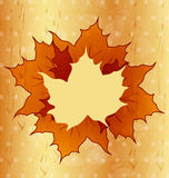 Autumnal maple leaves, wooden texture Royalty Free Stock Image