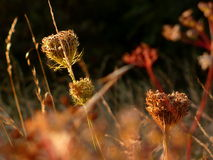Autumnal meadow Stock Image