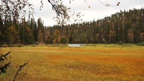 Autumnal meadow and forest. Meadow and forest in autumn in Finland Royalty Free Stock Image