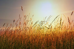 Autumnal Meadow at sunset, with bright sunshine Royalty Free Stock Photography