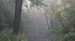 Autumnal misty early morning by forest river Royalty Free Stock Photos
