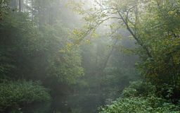 Autumnal misty erly morning by forest river Royalty Free Stock Photography