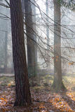 Autumnal misty morning in the forest Stock Photo