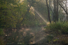 Autumnal misty morning by forest river Stock Image