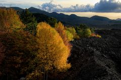 Autumnal mixed forest surronded by cooled lava of 1976 in Etna Park at evening stock photography