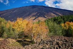 Autumnal mixed forest under slope of Etna Mount stock image