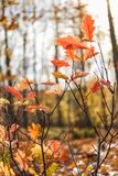 Autumnal mood with colorful leaves. In german deciduous forest stock image