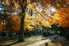 Autumnal mood. Park with trees in the fall royalty free stock image