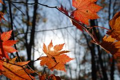 Autumnal morning stock images