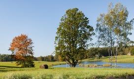 Autumnal motif Stock Photos
