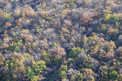 Autumnal mountain forest Royalty Free Stock Image