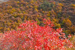 Autumnal mountain forest Stock Images