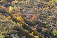 Autumnal mountain forest Stock Photos