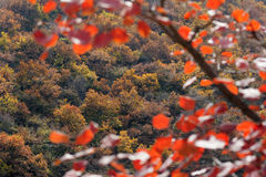 Autumnal mountain forest Royalty Free Stock Photography