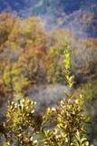 Autumnal mountain forest Stock Photo