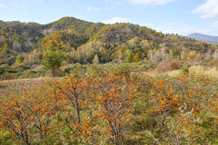 Autumnal mountain scenery Royalty Free Stock Photography
