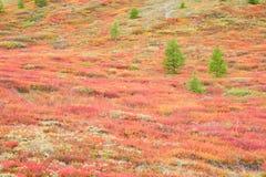 Autumnal Mountain Tundra Stock Photo