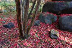 Autumnal nature stock image