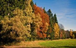 Autumnal nature royalty free stock photos