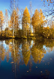 Autumnal nature, birches reflected in water Royalty Free Stock Photos
