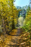 Autumnal nature,  path Stock Images