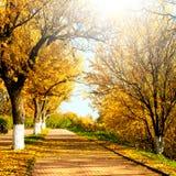 Autumnal nature, scenery Stock Photos