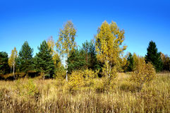 Autumnal nature, scenery Royalty Free Stock Photos