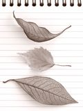 Autumnal notepad Stock Photography