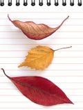 Autumnal notes Stock Photos