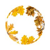 The circle from leaves royalty free stock image