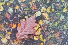 Autumnal oak leaf on ground. Autumnal oak leaf fallen on ground Royalty Free Stock Photography
