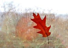 Autumnal oak leaf on  window at rain Stock Photo