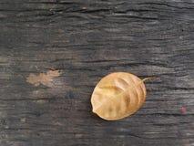 Autumnal oak leaves. On wood background Royalty Free Stock Photo